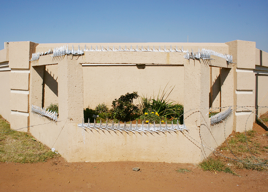 beige wall protects growing green in a dusty sorrounding also protected with barbwire and metal spikes