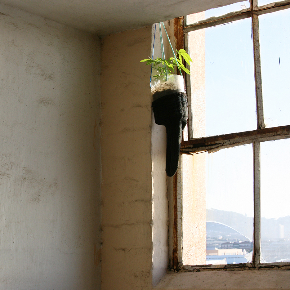 marihuana plant hanging infront of a window decorated with a giant sock